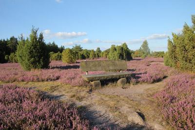 Ausflugsziel Heideblüte bei Uelzen